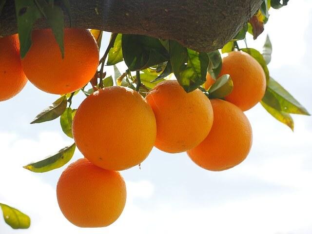 oranges-1117498_640