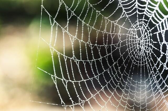 spider-silk-1287407_640